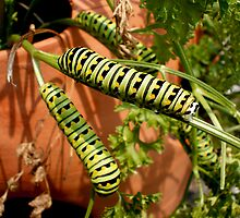 Caterpillar Hangout by Kyle Hudak