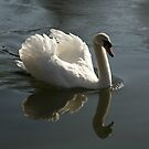 Swan by Ann Heffron