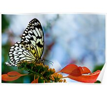 Rice Paper Butterfly Profile Poster