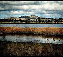 The Birdwatching Hut - Dangars Lagoon, Northern Tablelands, NSW, Australia by Kitsmumma