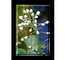 FEATHER PLANT Photographic Print