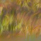 Abstract Grasses by bouldercreek