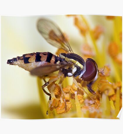 Pollen-esian Punch ! Poster