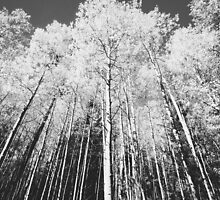 Flagstaff, Az - Aspen View  by Candy Gemmill