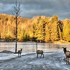 Winter in Quebec / Canada by John44