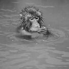 Snow Monkey by Shannon Plummer
