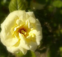 Yellow Rose in Focus by Adam Jackson