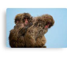 Snow Monkeys Canvas Print