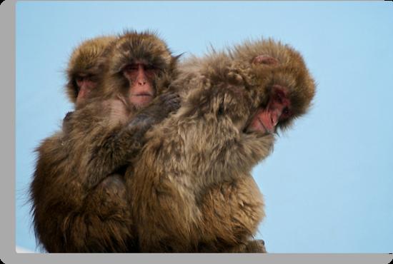 Snow Monkeys by Shannon Benson
