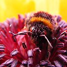 Pollen Thief by wahboasti