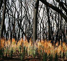 Blackened Stringy Barks by GreenHoodMaiden