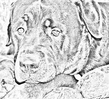 Rottweiler by PixelChez