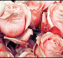 Roses for her by DavidROMAN