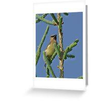 Highest Point Cedar Waxwing Greeting Card