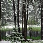 June Snow by Jill Doyle