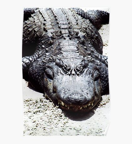 FLORIDA ALLIGATOR Poster