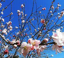 Springtime Japanese Gardens Toowoomba Qld Australia  by sandysartstudio