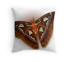Atlas Moth On White Throw Pillow