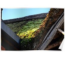 Moss on Thatch.............. Poster
