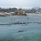 Cold Cows - Nairne by LeeoPhotography