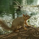 mr. squirrel by Lacy O.