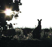 Kangaroo Silhouette by Scribbler