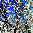 almond blossom by bibithebaby