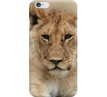 Masai Mara Lion Portrait  iPhone Case/Skin