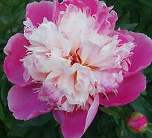 Princess Peony by David Smith