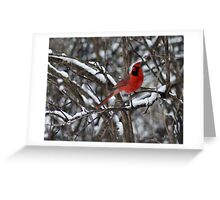 Beauty in the Snow. Greeting Card
