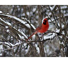 Beauty in the Snow. Photographic Print