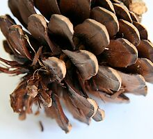 Pinecone by Maggie Hegarty