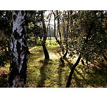 sherwood forest Photographic Print