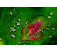 A Petal & Droplets Photographic Print