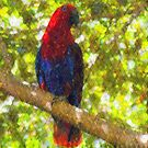 Eclectus Parrot by Imageo