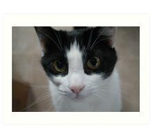 Curious Cat Close Up Art Print