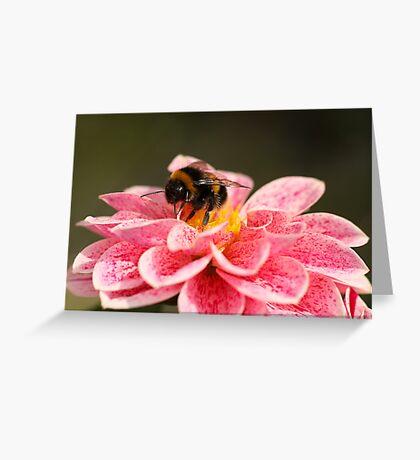 Dahlia & Bee Greeting Card