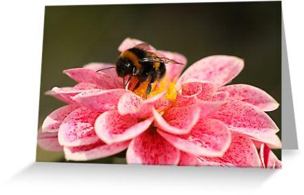 Dahlia & Bee by Tawny
