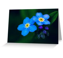 forget-me-not macro Greeting Card