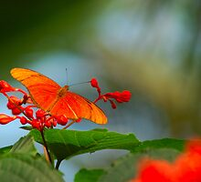 butterfly by jpghouse