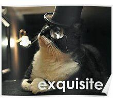 Exquisite Cat Poster