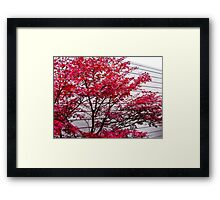 fall lines Framed Print