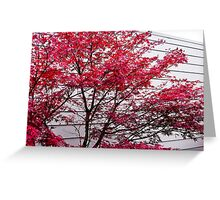 fall lines Greeting Card