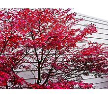 fall lines Photographic Print