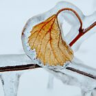 Ice Encased Leaf by Laurie Minor