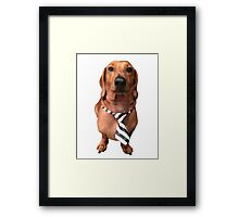 Dachshund Sausage Dog wearing tie Framed Print