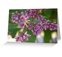 Korean Lilac Greeting Card