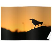 Grackle in the sunset Poster