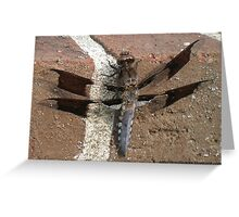 Dragonfly With See Through Wings Greeting Card