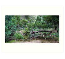 Tree over creek Art Print